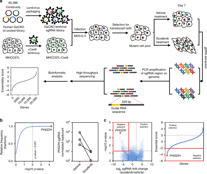 development and applications of crispr cas9 for genome engineering