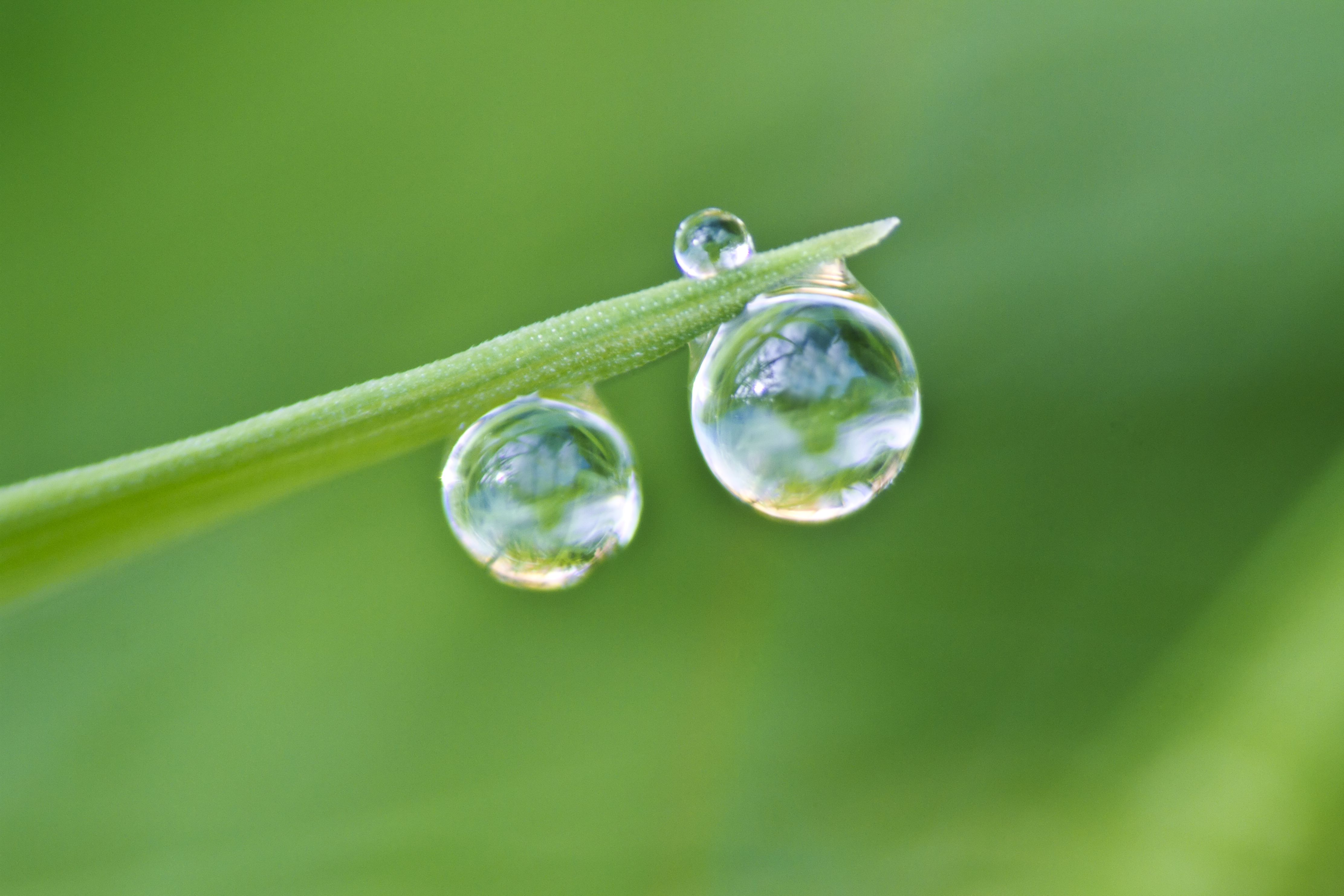 application of surface tension in daily life