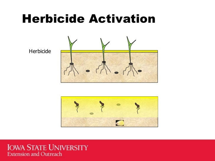 application rates for roundup herbicide