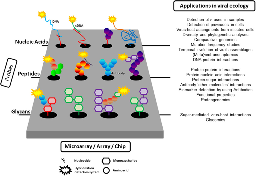 microarray technology and its applications ppt