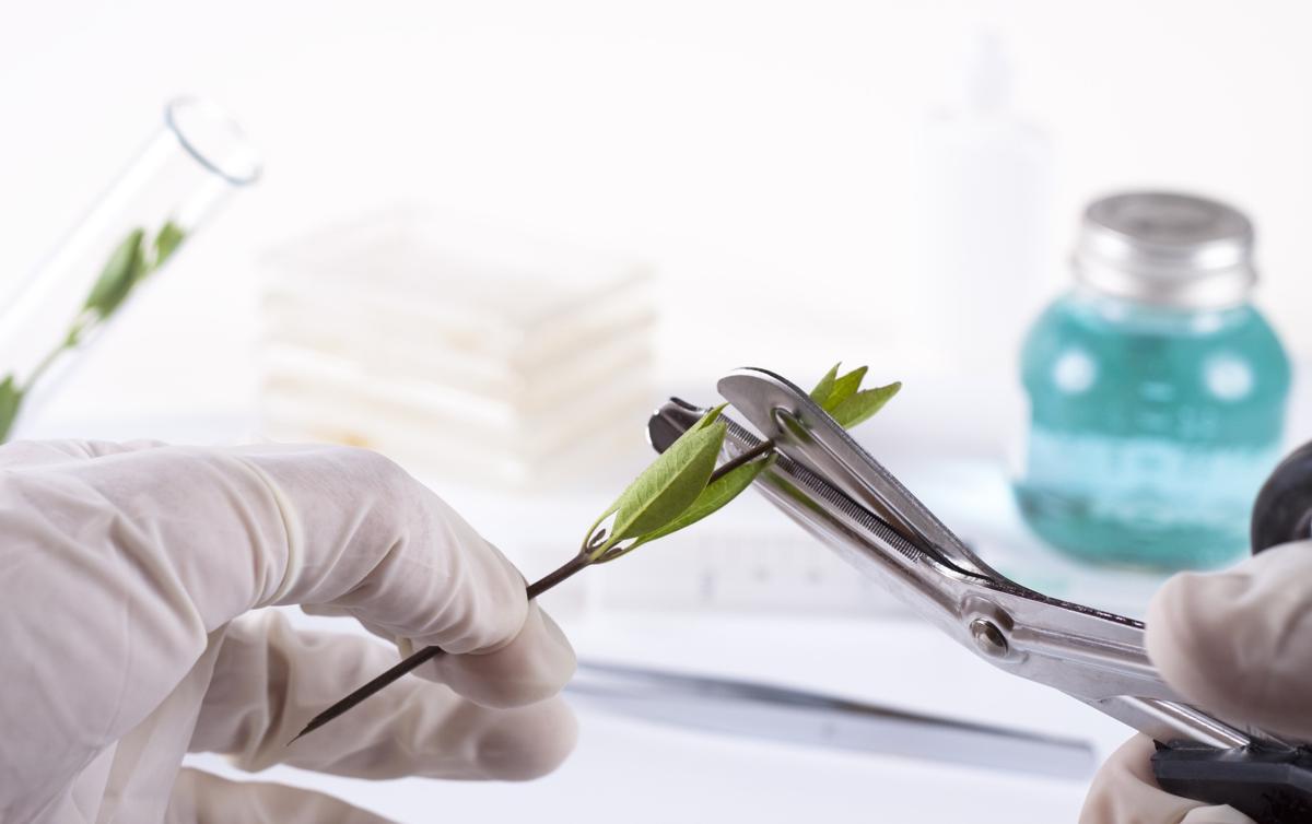 application of plant genetic engineering