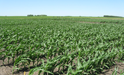 fertilizer application rates for corn