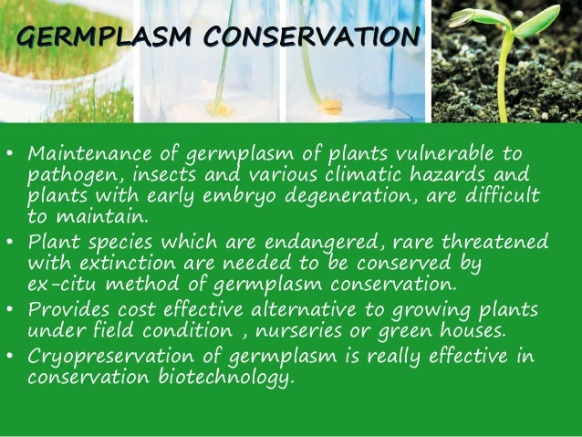 plant tissue culture techniques and applications ppt
