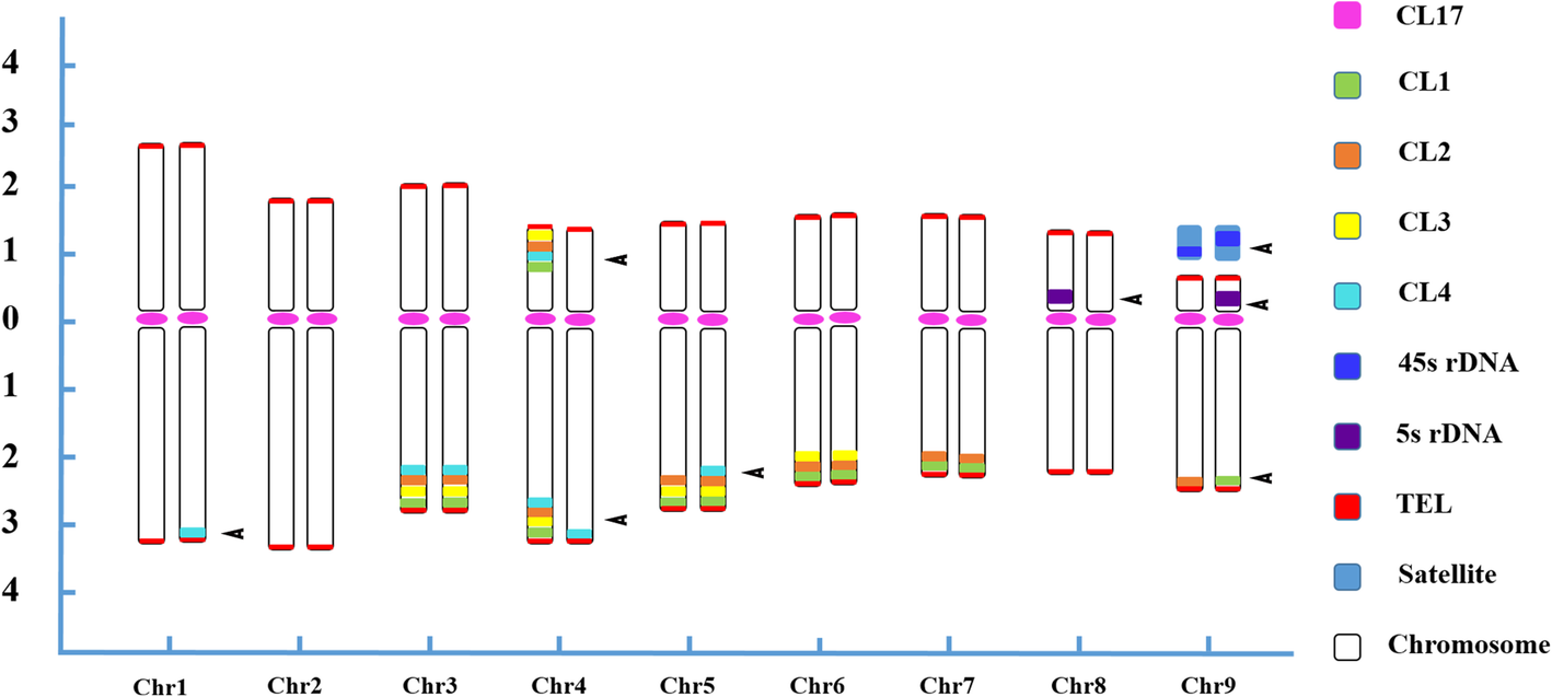 somatic hybridization and its application